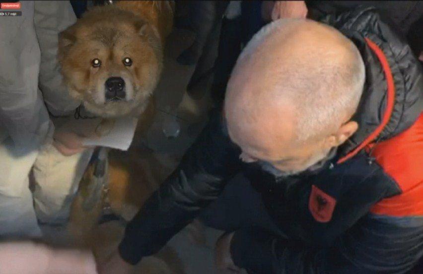 Qeni u shpëtoi jetën, por nuk e pranojnë në hotel. Ja çfarë bën kryeministri Rama