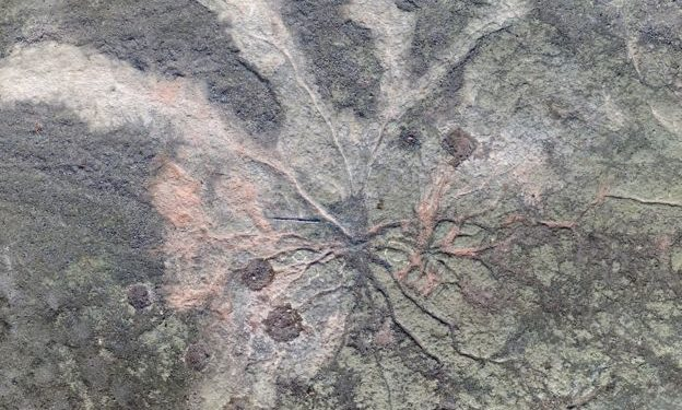 Zbulohen fosilet më të vjetra të pemëve në botë, datojnë 386 milion vjet më parë